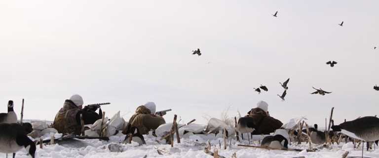 Decoy Spreads for Canada Geese
